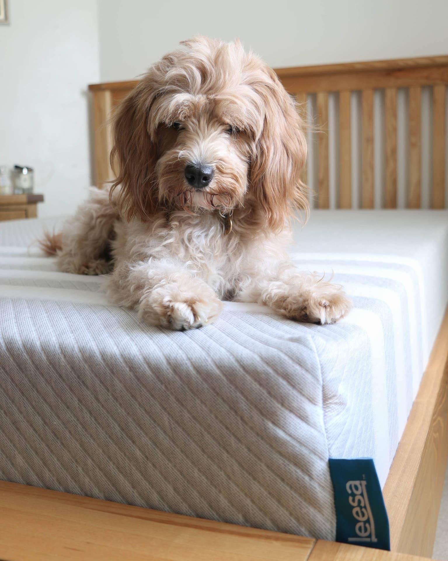 lees mattress