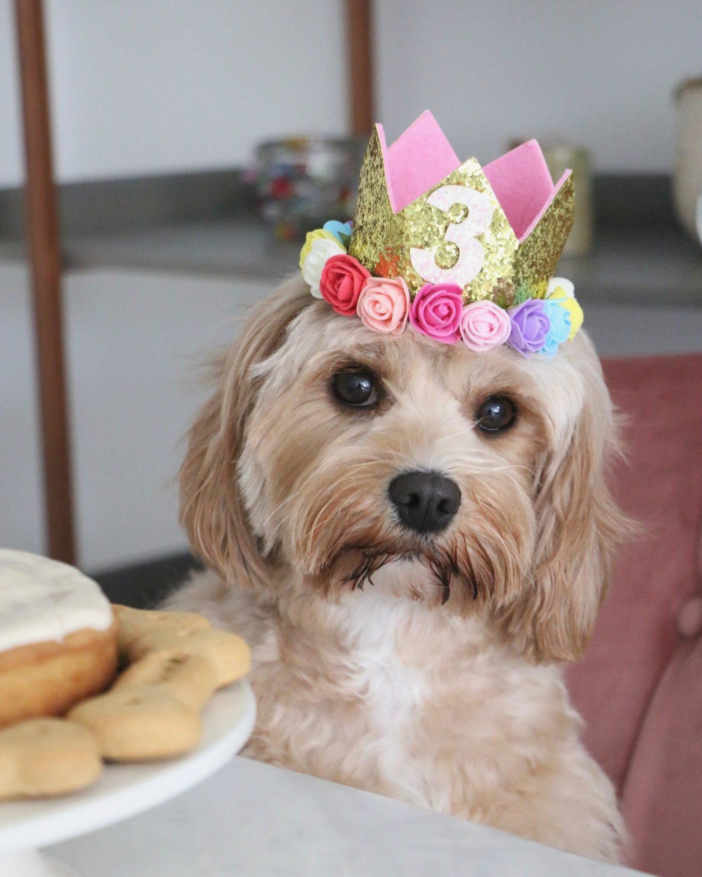 Astounding Dog Birthday Cake Recipe Banana Peanut Butter Personalised Birthday Cards Veneteletsinfo